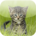 Amazing Kitten Tap Puzzles - free for iPad